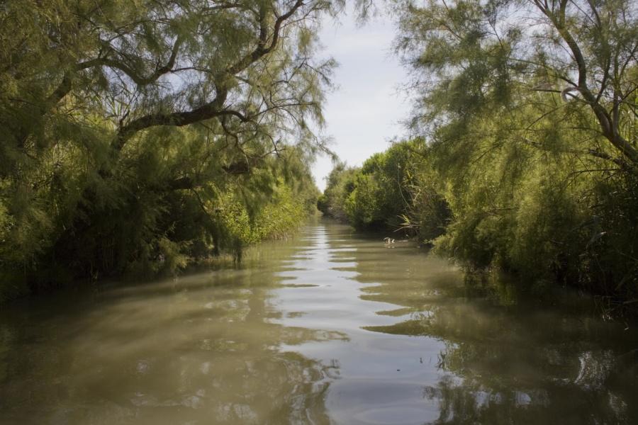 Delta du Rhône, méconnu et sauvage © David Desalheux