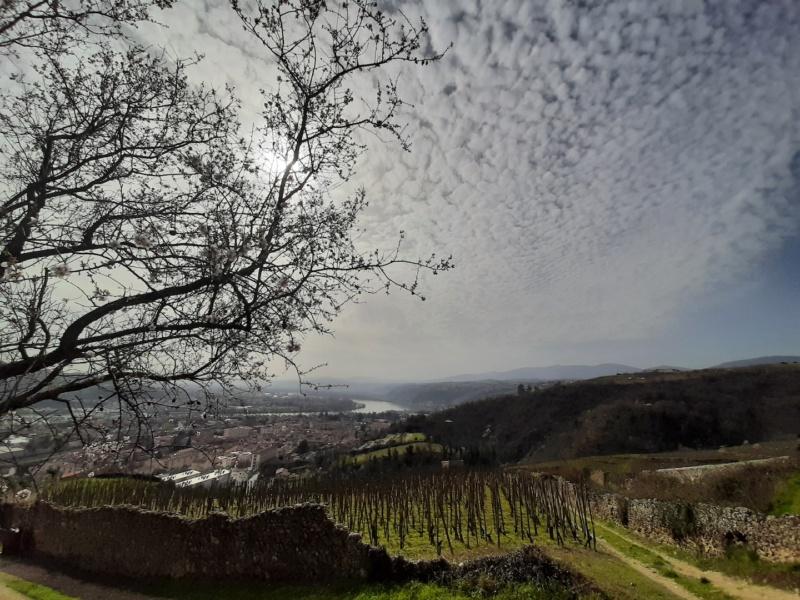 les vignes a Condrieu © mairie de Condrieu
