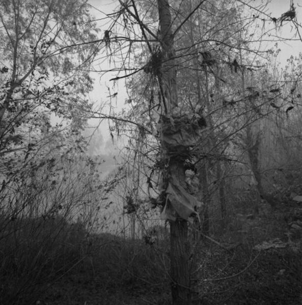 Lône 5 © Jacqueline Salmon