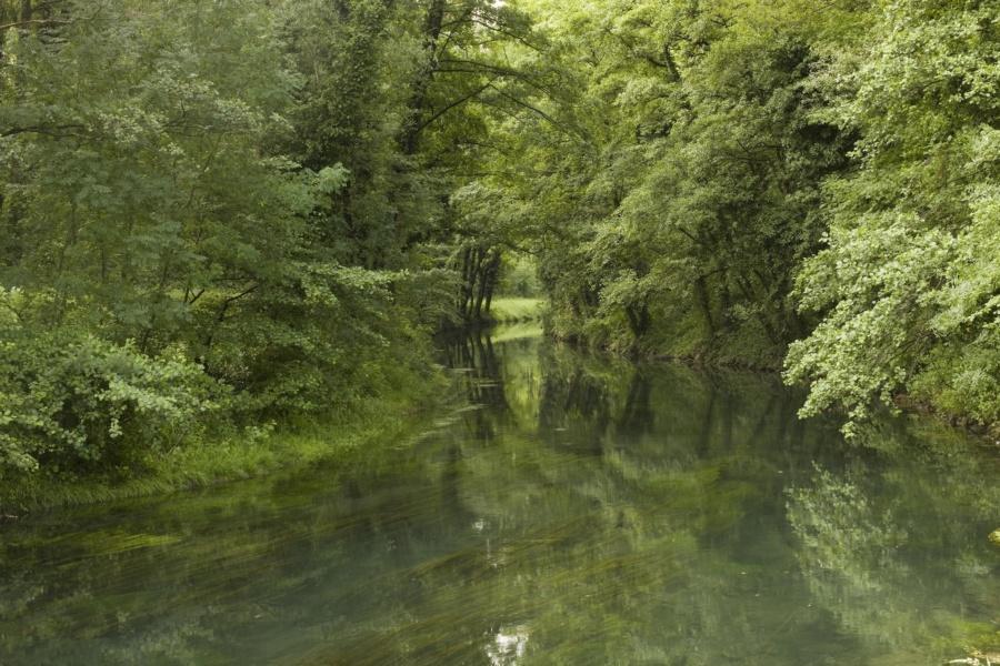 Lône vers la Voulte sur Rhône © David Desalheux