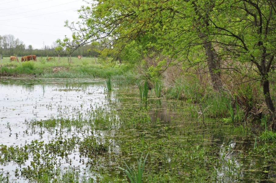 Milieu humide Marais de Boistray © Conservatoire des Espaces Naturels RA