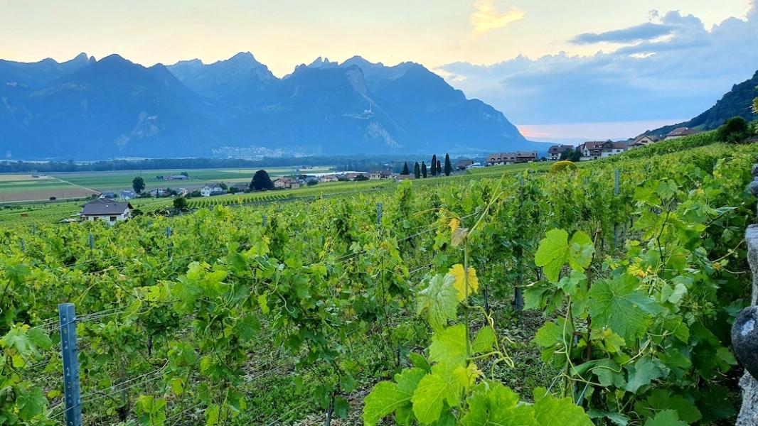 Vallee du Rhone depuis les vignes d Yvorne et Aigle © Andre Deyrieux
