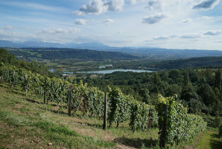 Vue du vignoble d Izieu sur le Rhone © Syndicat des vins du Bugey V Bernard.JPG