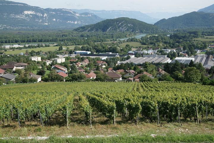 Vue du vignoble de Culoz sur le Rhone et la Savoie © Syndicat des vins du Bugey V Bernard.JPG
