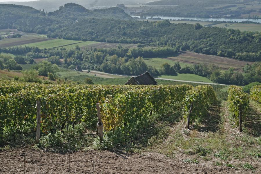 Vue du vignoble de Montagnieu sur le Rhone © Syndicat des vins du Bugey V Bernard.JPG